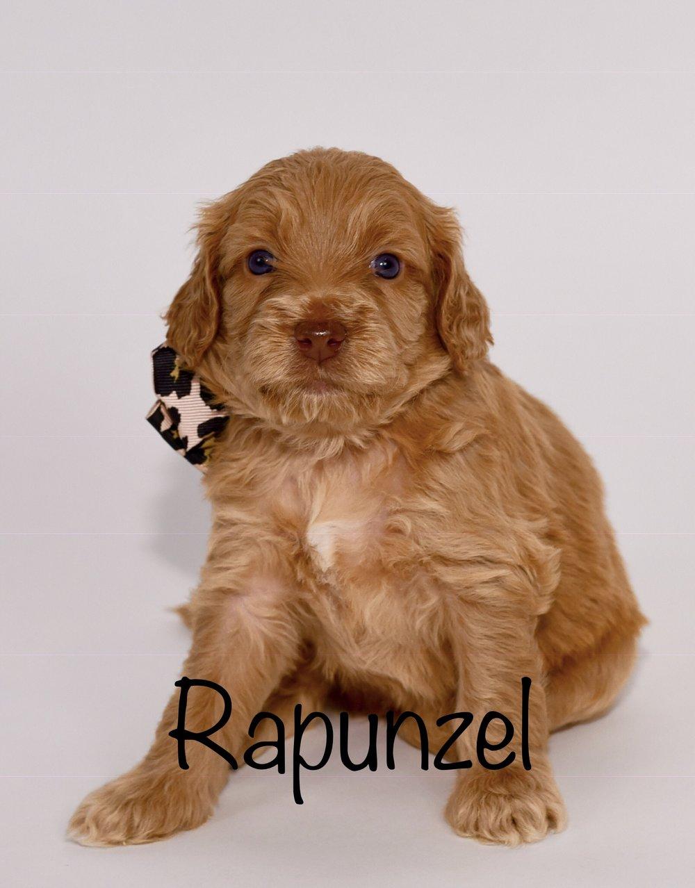 rapunzel4weeks.jpg