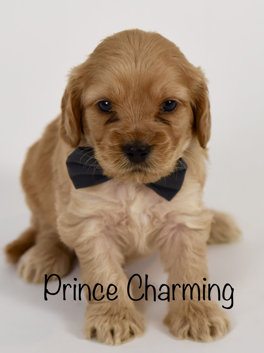 princecharming4weeks.jpg