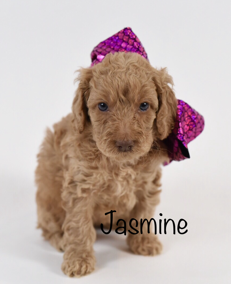 jasmineweek5.jpg
