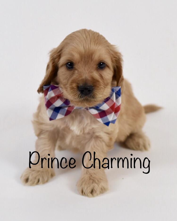 princecharmingweek5.jpg