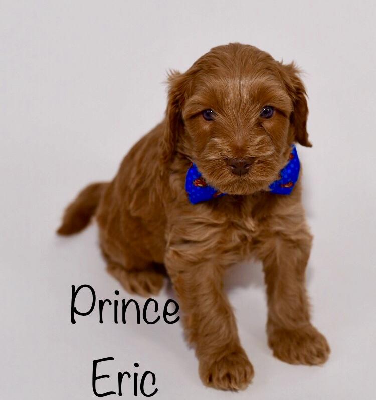 princeericweek5.jpg