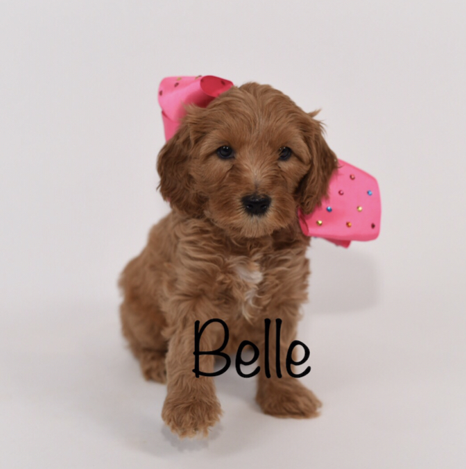 belle6weeks.jpg