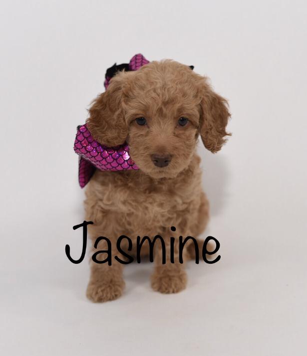 jasmine6weeks.jpg