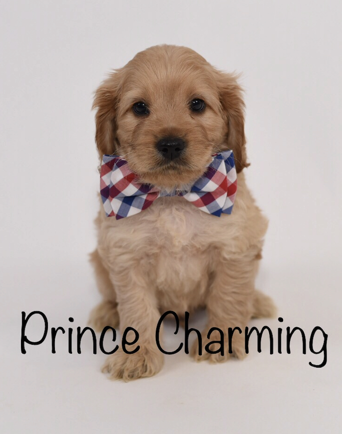 princecharming6weeks.jpg