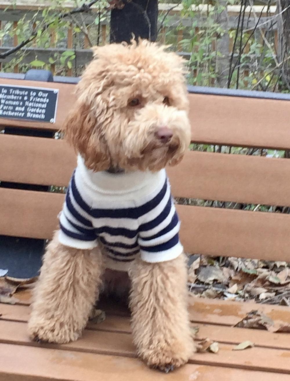hazelsweater.jpg