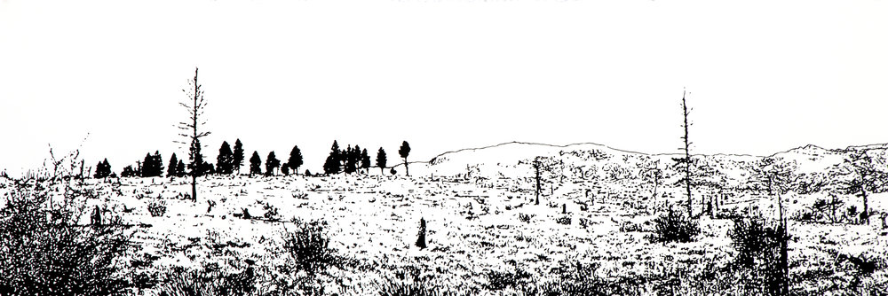 """""""Sequestered Smoke""""  ink drawing on paper  16"""" h x 42"""" w  framed  The drawing is animated with animals of the Hayman Fire burn area  returning to their habitat. It can be animated or not."""