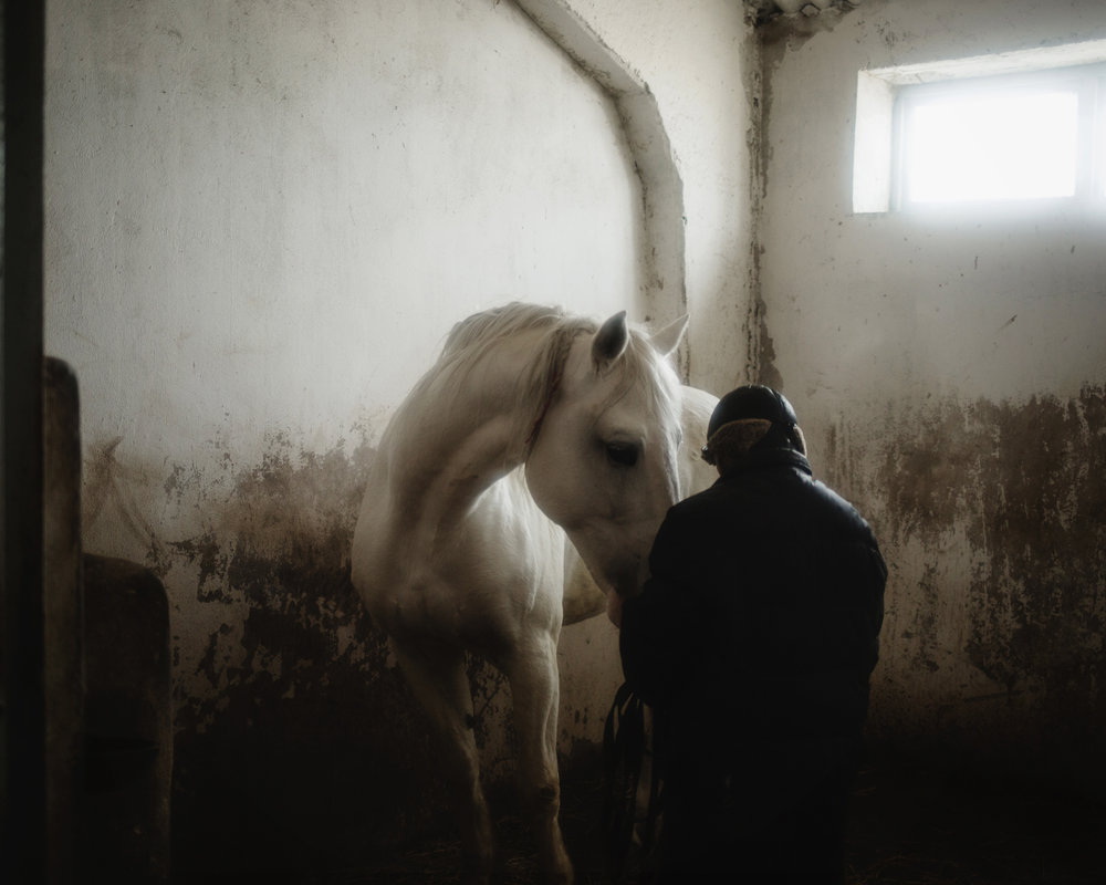 Ceadir-Lunga - In Konstantin Kelesh stud farm, a man takes care of one of the horses after its training