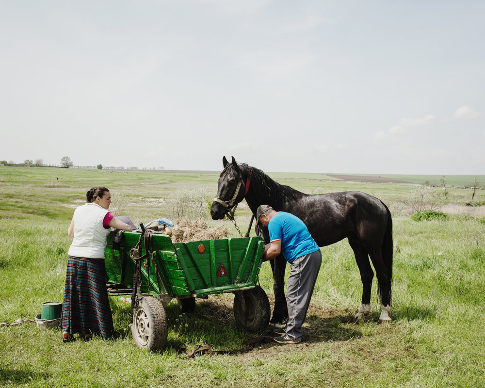 Ceadir-Lunga - During the yearly Hederlez horse races, Nicolaï, a participant, prepares his horse Lipitune before the race with his wife Irina.