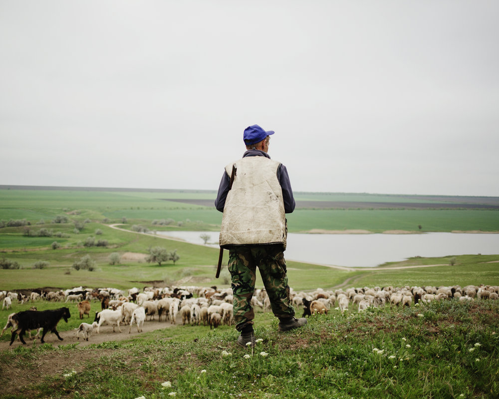 Beshgioz - Micha (45 years old), a shepherd with his sheeps arriving to a lake close to Beshgioz.