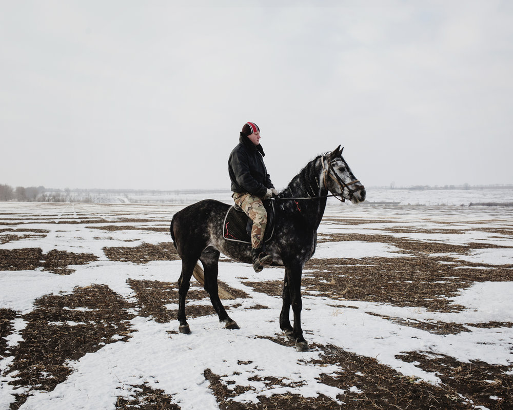 Ceadir-Lunga - In Konstantin Kelesh stud farm, Konstantin's son trains a horse early in the morning.