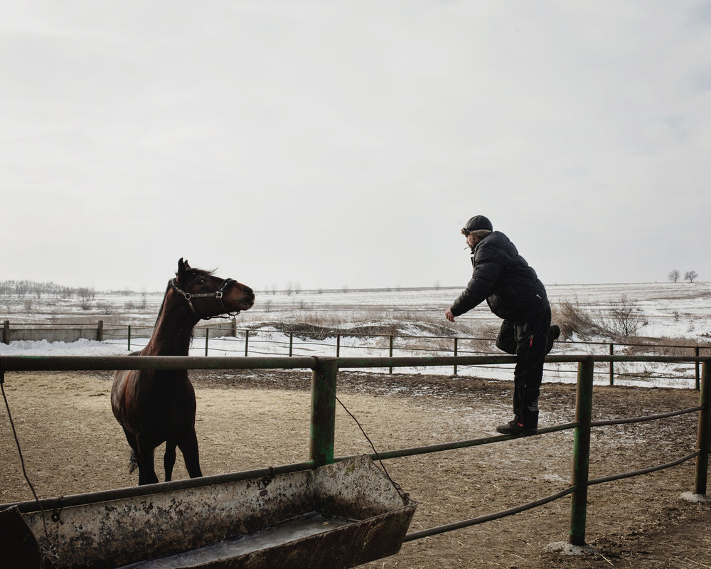 Ceadir-Lunga - In Konstantin Kelesh stud farm, a man play with one of the horses of the stud farm.