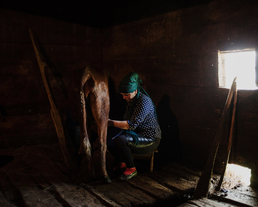 Ghorjomi. Natia milked her cow in the early morning. She has only one cow for their own dairy products. Her husband Zihal and she try to develop an economy not based on agriculture.