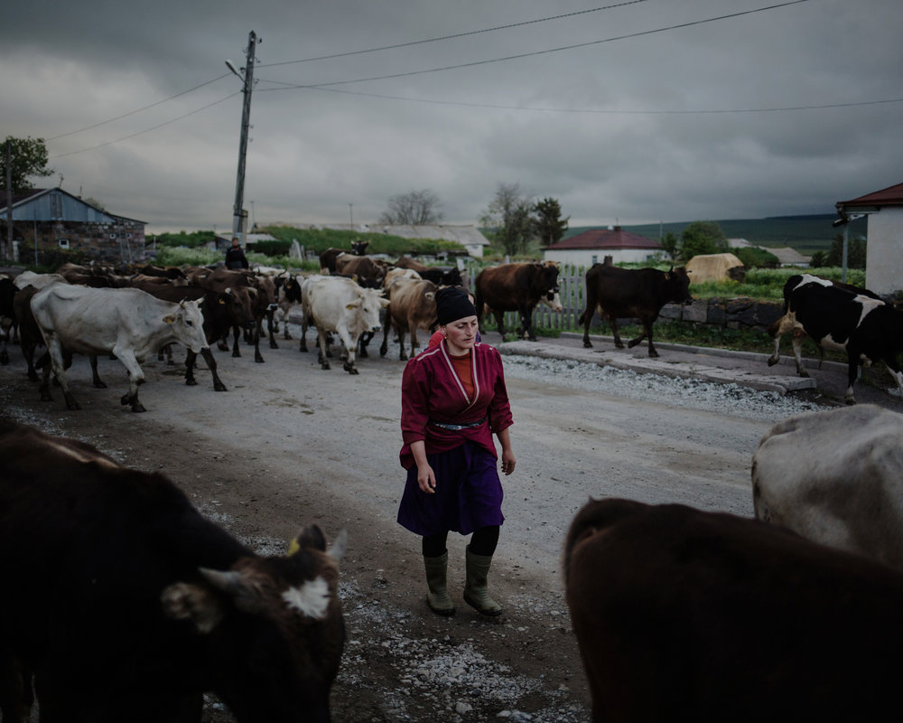 Gorelovka. As cows are coming back from the fields, an Adjarian woman comes to pick her animals. Adjarians who arrived in the region are climatical refugees, they fled landslides in Adjara.