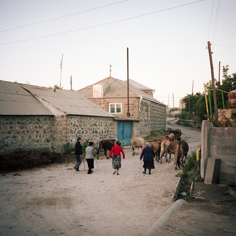 Women from the village fetch their cows in the evening.