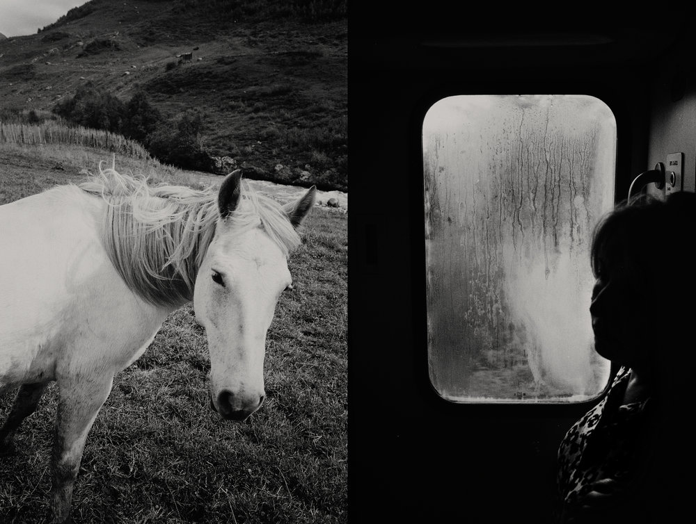 test_2_horse.jpg