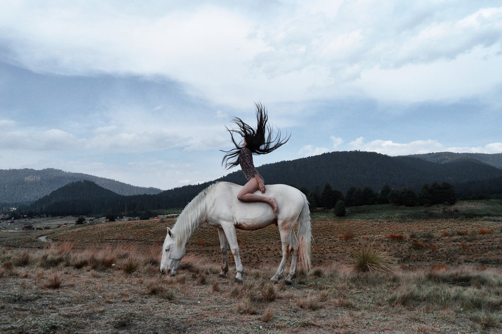 """""""We can realize our energy, personified as the horse, and it can do a lot for us, but only if we live under the law of our being."""" - –Barbara Hannah, The Cat, Dog, and Horse Lectures"""