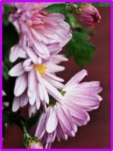 Flower II.jpg