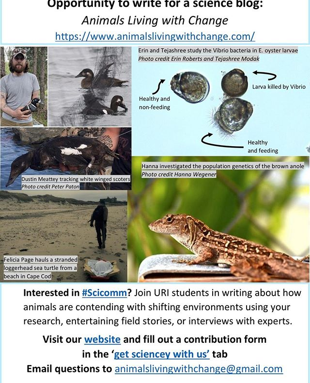 Want to contribute to Animals Living with Change? We are looking for enthusiastic science communicators to share research, entertaining field stories (#fieldworkfail) or if you aren't currently doing research but still want to communicate about science: conduct an interview with someone doing research you are excited about! Visit our website and fill out a contribution form or DM us for more info  #animalslivingwithchange #scicomm #sciencecommunication #blogging #physiology #scoters #seaducks #oysters #🐸🐧🐦🦆🐢🦎 🐚 #herpetology #fieldwork #ornithology #bioecology #ecology #climatechange