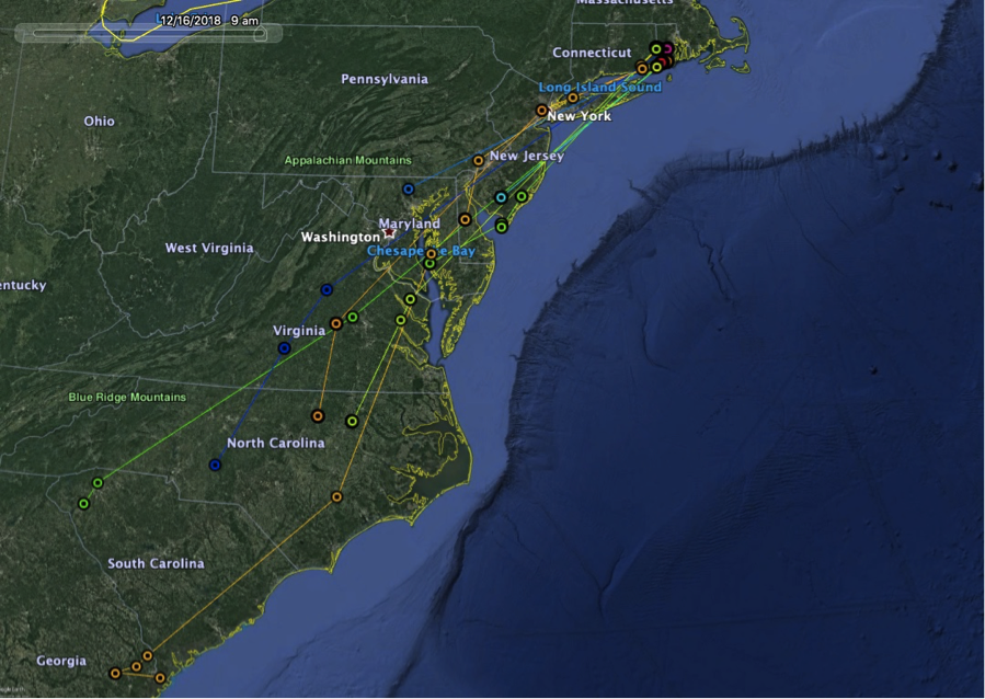 RI caught American Woodcock (circles) and their movements in during fall migration (November-December 15), informed by GPS transmitters.  Map created by Clay Graham