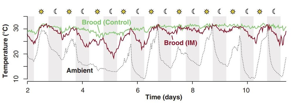 Crall et al. 2018, Figure 3 C. Brood versus outdoor temperatures for control, normal nectar fed colonies (C, green) and treated, imidacloprid fed (IM, red). Transparent markers show individual measurements across all colonies, and solid lines show LOESS-smoothed trends by treatment.