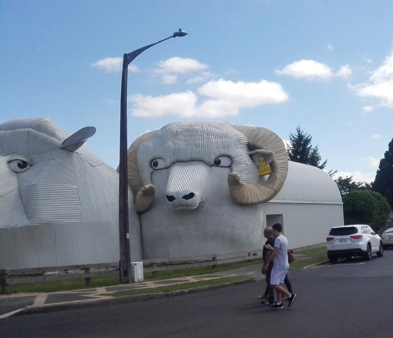 corrugated-sheep.jpg