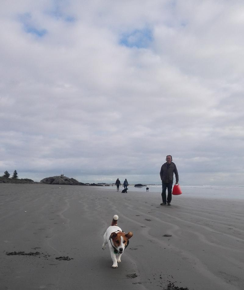 Jack-Russell-on-beach.jpg