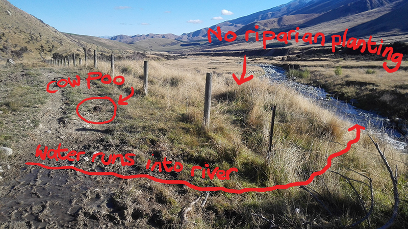 Why New Zealand Rivers are in a bad way - a simple diagram