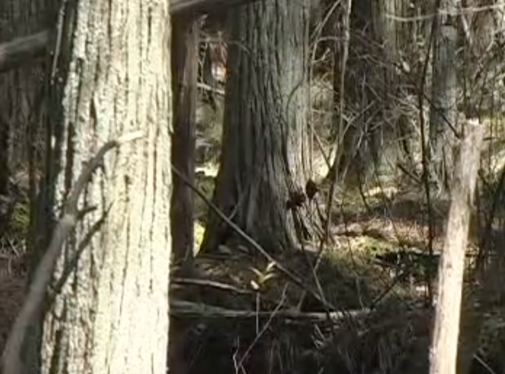 pine barrens audrey smith video