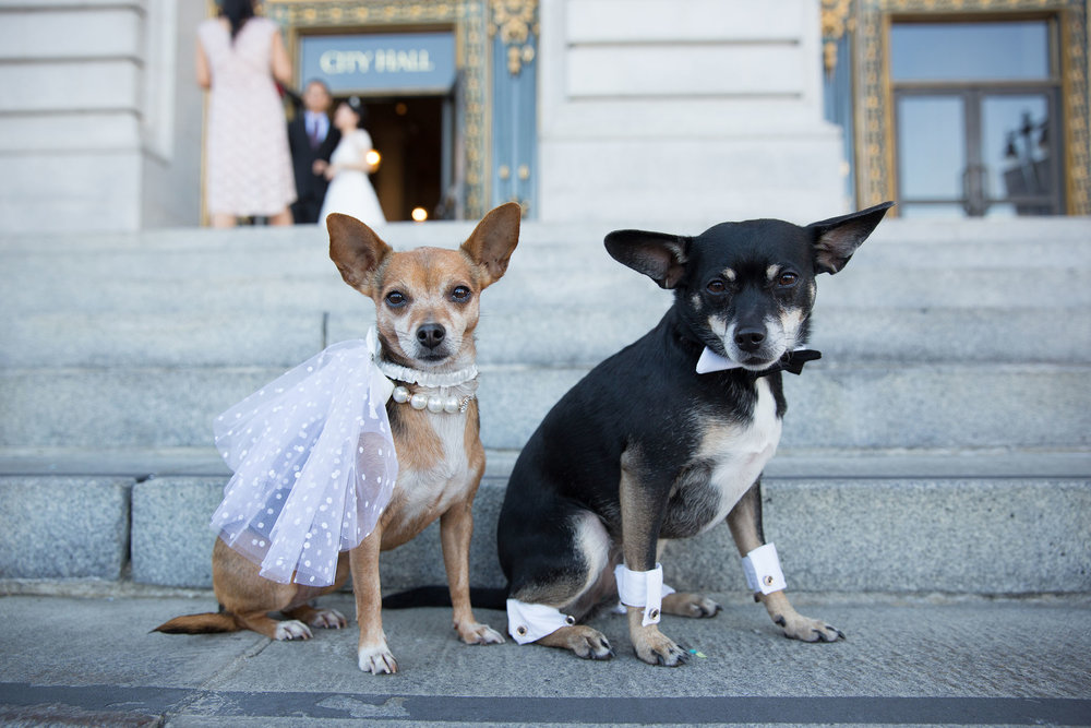san_francisco_city_hall_chihuahua.jpg