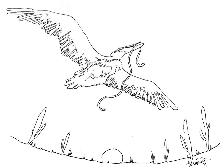 Pelican in the Desert.jpg
