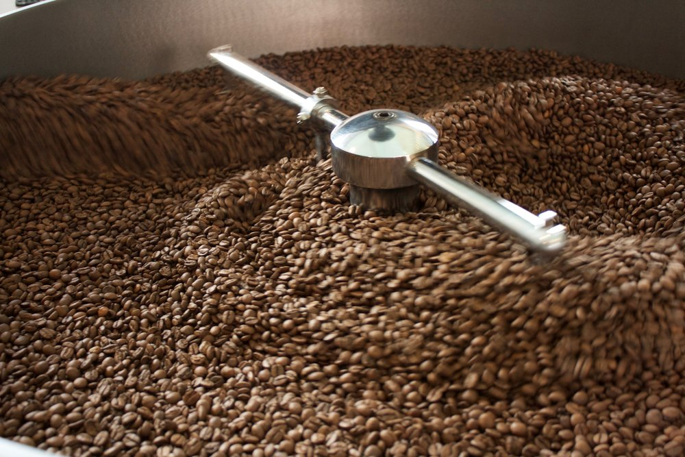 Freshly roasted coffee beans in the cooling tray.