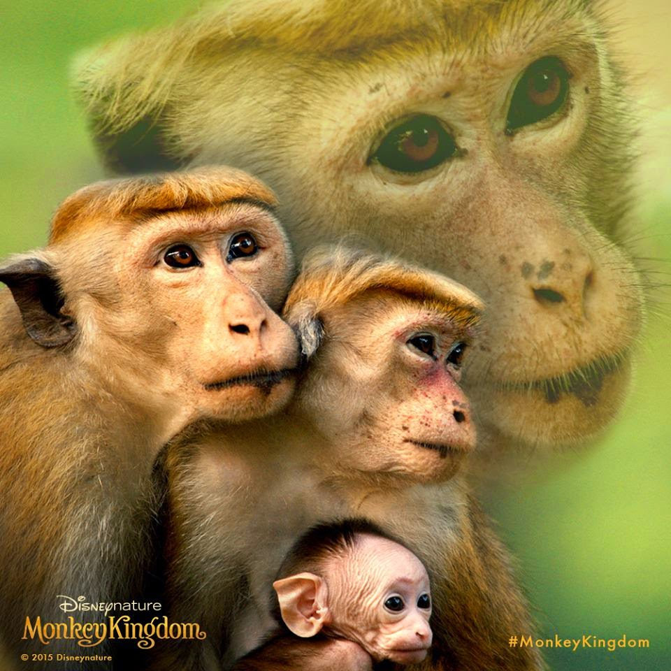 monkey kingdom2.jpg