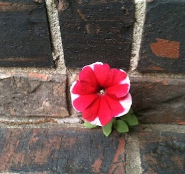 "Photo: Julie Turner |  ""I love the crack in the sidewalk. There, where a tiny seed can grow."" from ""I Love This Town"" © Turner & Grusecki"
