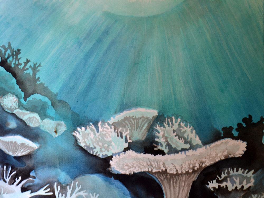 Bleached Reef Light