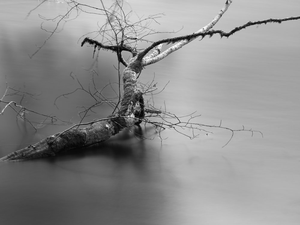 Sunken Branch