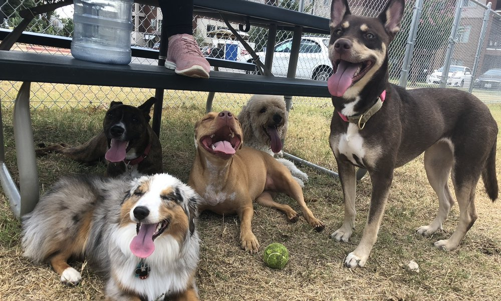 Chewy.com rated Work and Woof as one of the best places to vacation with your pups in Austin!   https://www.chewy.com/petcentral/the-best-places-to-vacation-with-your-dog-austin-texas/
