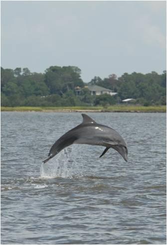 DolphinJump (2).jpg