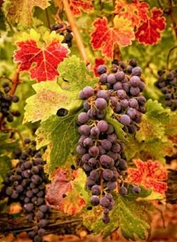 455678e9bd2b11ca9b978a4c4225edbe--autumn-harvest-autumn-fall (1).jpg