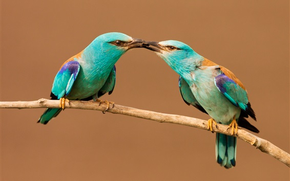 Two-birds-share-food-beak-insect_m.jpg