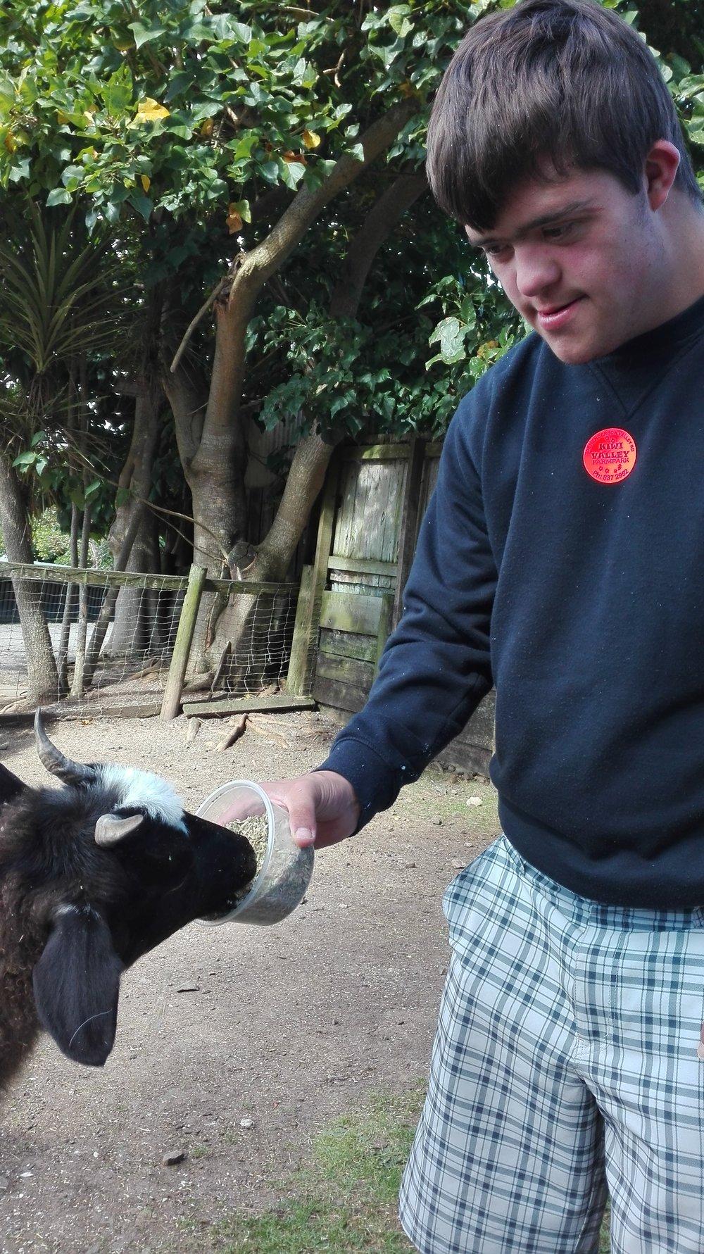 Kiwi Valley Farm Park