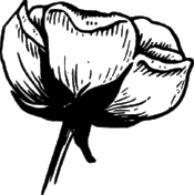 flower-37892_640.png
