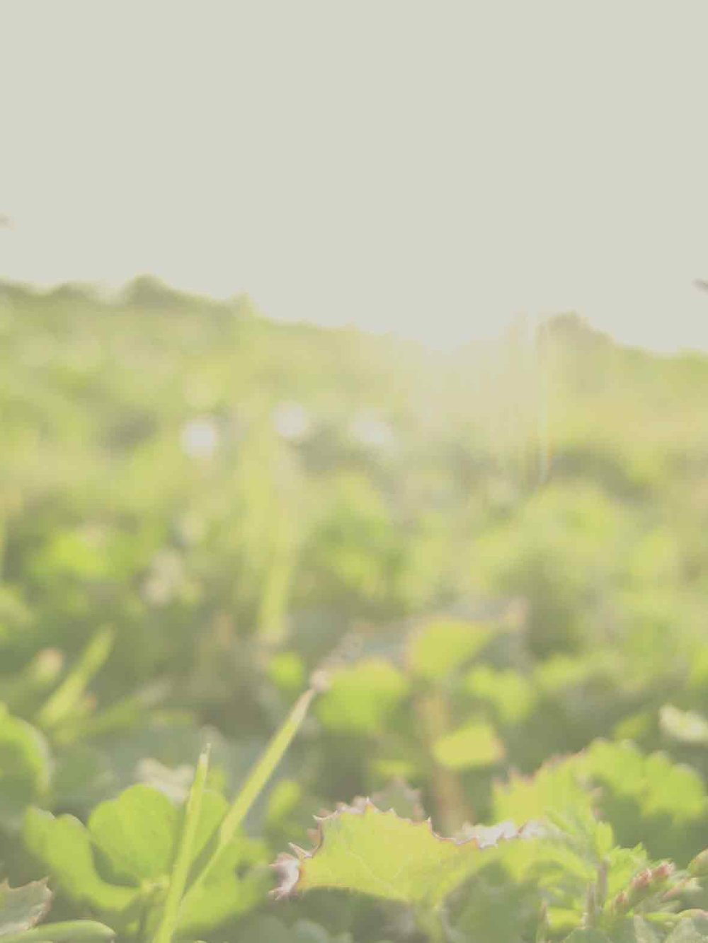 With humble thanks ... - Kim McLeanScott WilsonAdam CountrymanEric RumbleSilva HelmerGordy & Sandy BraunMarie GrayJason Christie & Andrea RyerDave WasylowBrendan FraserJeff StoreyClinton St. JohnDan CherwoniakKozak FamilyJordan TettensorSandeep AggarwalAnonymousJeff MacleodHelen HadalaShannon ZaychukRose Ashworth
