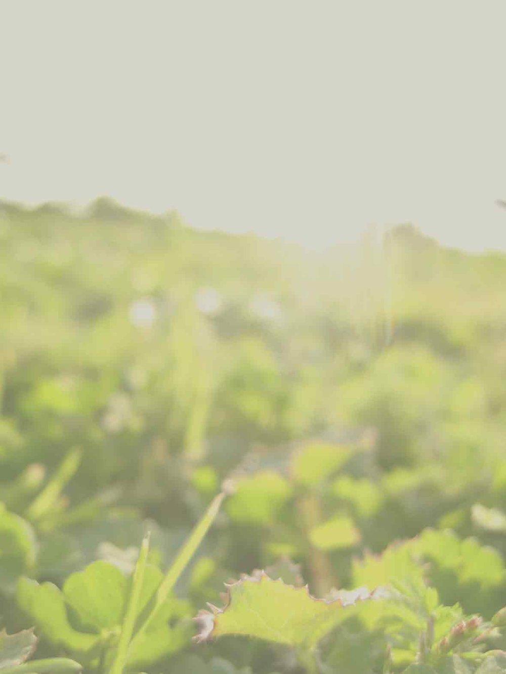 There from the beginning... - Kathi SundstromB & T FlegelMary SorensenTaz & Amir DhallaAnonymousSue BayneBrenda PullmanKris CruikshankLiz & Eldon HnylciaFrank StarrattPete & Bev MalenicaDavid & Pam KohlenbergDavid MartinLinda ChichakDave & Barb GreigKelly DevallTrent & Maureen BaisleyBen Polos Professional CorporationValerie PilsonKurt BrackmanMartine O'ConnorBernard FungPetroleum Joint Ventures AssociationHealing Bridge