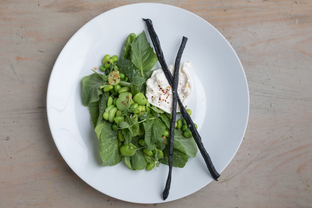 Burrata with Fava Beans and Greens.jpg