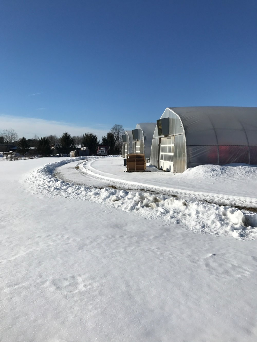 greenhouses snow.jpg