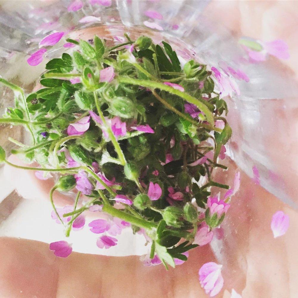 Creating Flower Essences Remedy Botanica