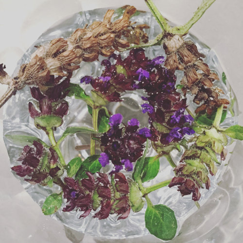 Self Heal infusing in a small glass.