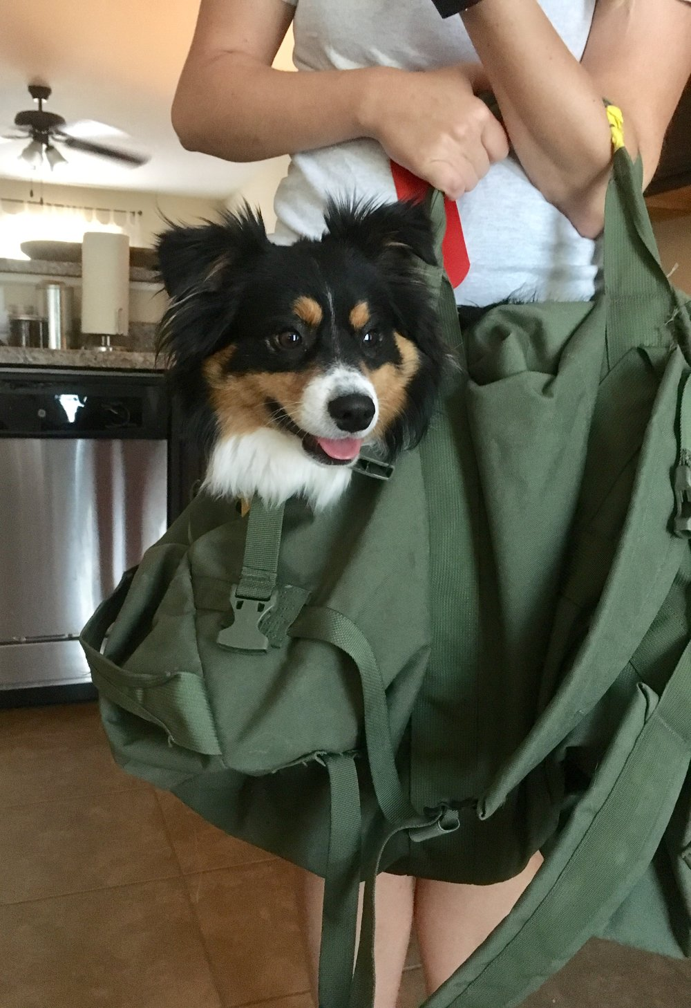 PCS-with-dogs-carry-on-carriers-schuyler-croy-main.jpg