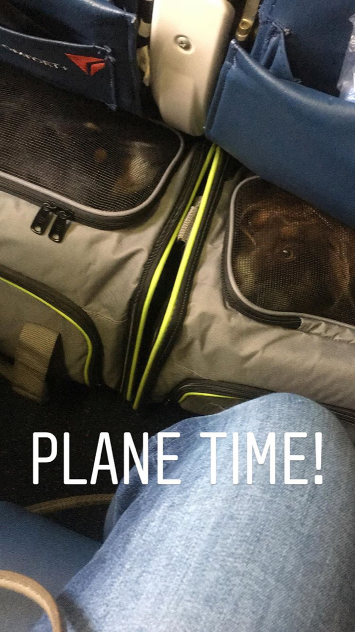 Flying with your pets on a plane schuyler croy