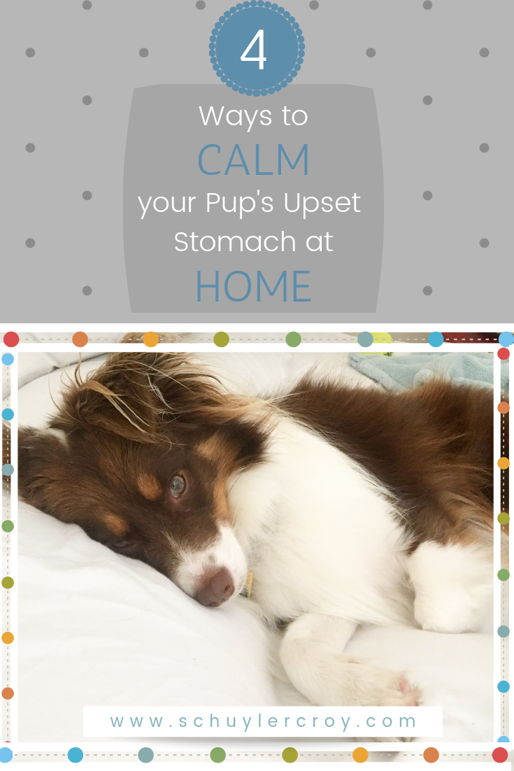 Four Ways to Calm Your Pups Upset Stomach at Home by Schuyler Croy author of Monroe Tales